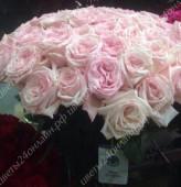 Пионовидная роза Pink O\