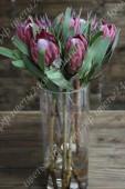 Протея / Африканская роза